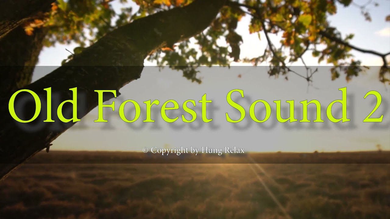 """Beautiful Relaxing Music - """"Old Forest Sound 2"""" by Hung Relax"""