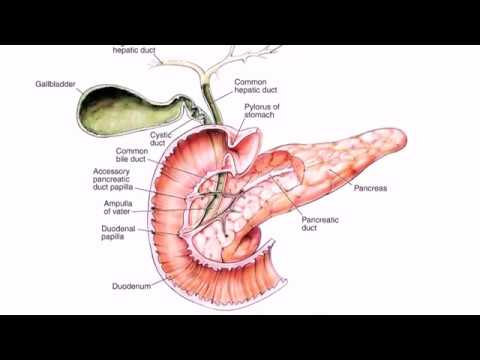 Chronic Pancreatitis