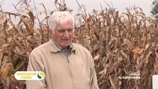Hibridi kukuruza za sve! Šumadinac, Delija, Bećar i Sremac