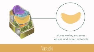 Unique Features of Plant Cells