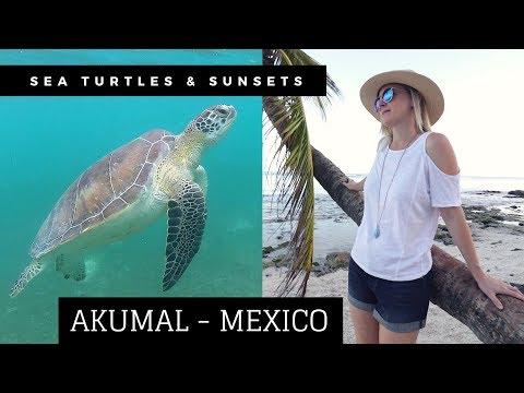 Why Visit Akumal? - Sea Turtles And Secrets Akumal Tour
