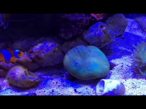 10g Aquaone Nano Marine Reef update , algae growth