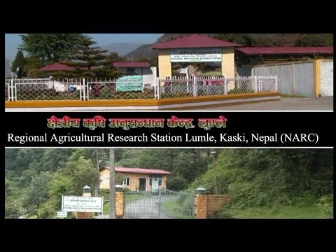 Documentary of Regional Agricultural Research Station Lumle, Kaski, Nepal NARC
