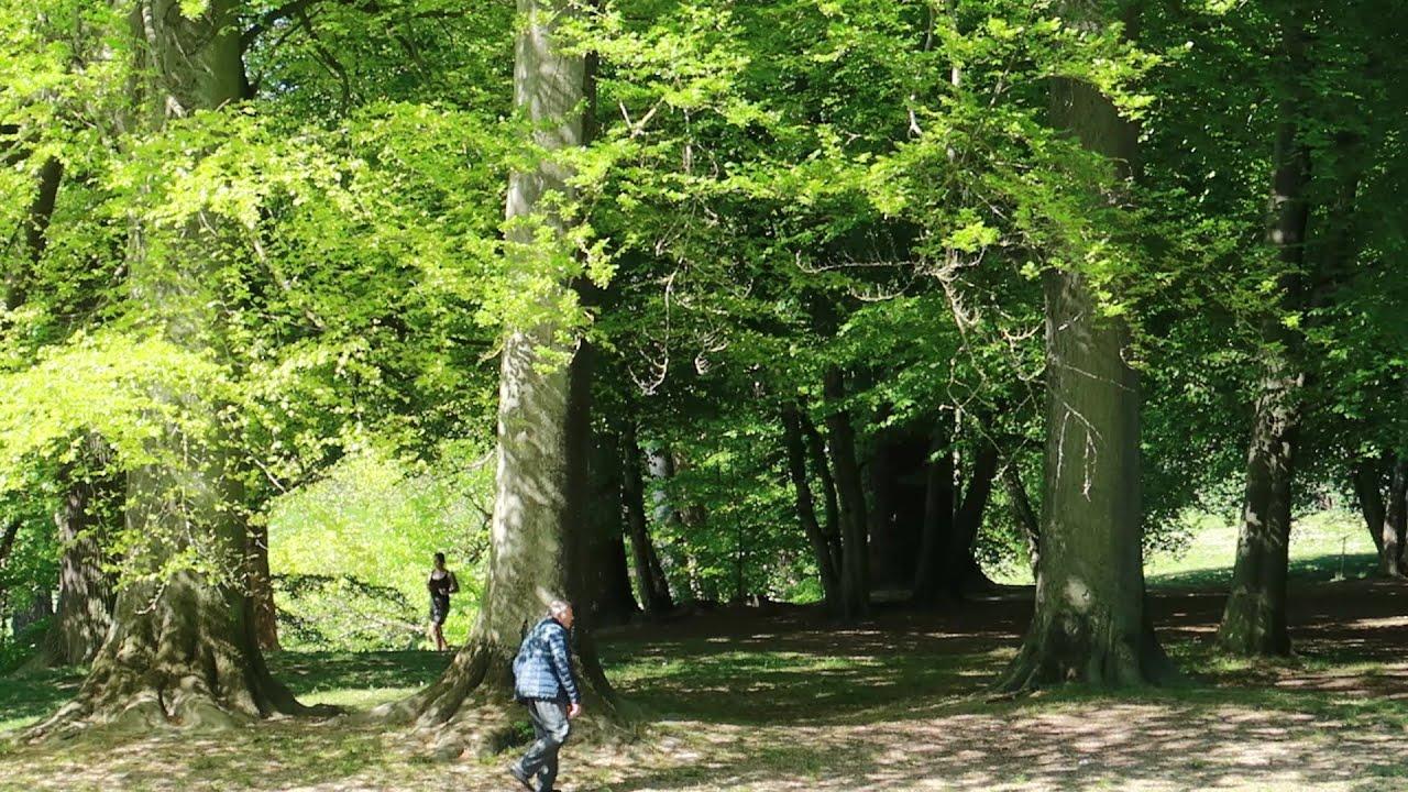 Nature walk - YouTube