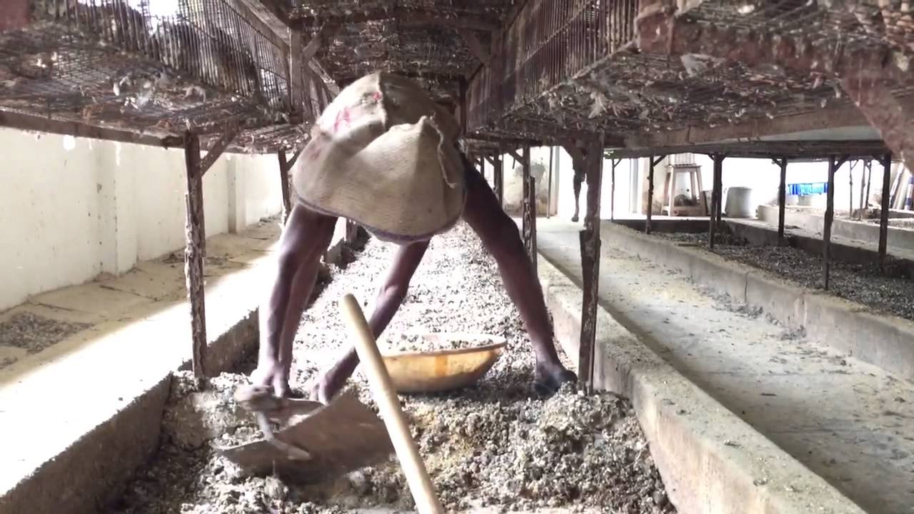 Waste Management Of Poultry Farms Youtube