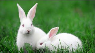 Rabbit Farm-India +91 812 900 4001