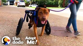Dog Rescued From Under an Abandoned House Looking For a Family | The Dodo Adopt Me!