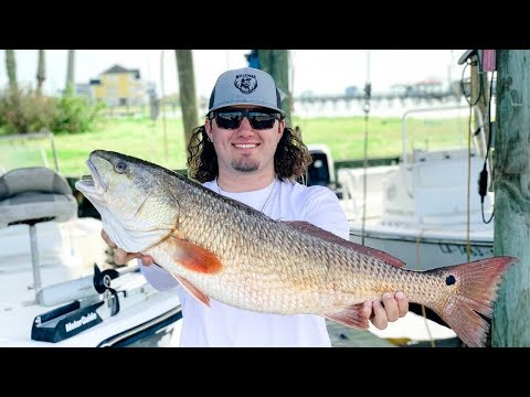 Louisiana RED FISH catch clean cook!! (on the half shell)