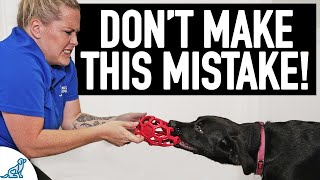 The BIG Mistake People Make When Teaching A Dog To Drop Something