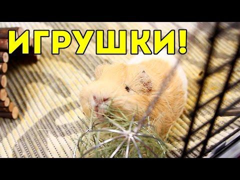 Игрушки Для Морских Свинок / SvinkiShow
