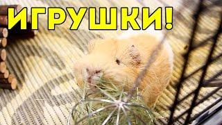 Іграшки Для Морських Свинок / SvinkiShow