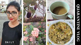 Quarantine VLOG  Noodles Recipe  Daily Life Buzz (বল)