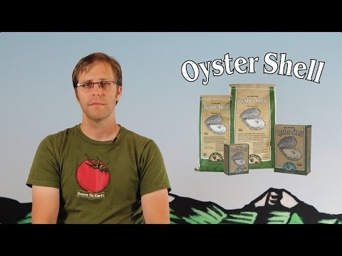 down-to-earth's-oyster-shell