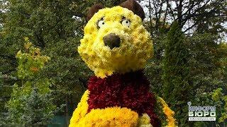 видео На Певческом поле в Киеве состоится фестиваль хризантем