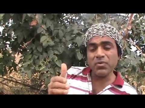 Mahdi Jesus is Rasool but not Nabi ! Ignorant Muslims create Nuisance.1/2