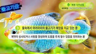 [예명사주상담] 물고기꿈해몽 54가지 총모음, 물고기꿈, 물고기잡는꿈, 물고기받는꿈, 낚시꿈, 물고기사는꿈,…