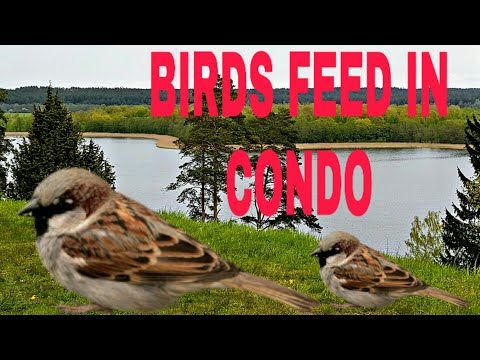 BIRDS FEED IN CONDO