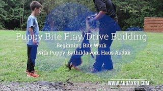 Pre-Teething Puppy Bite-work and Drive Building