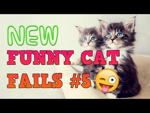 FUNNY CAT FAILS #5