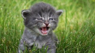 МИЛЫЕ СЕРЕНЬКИЕ КОТЯТА!!! //CUTE GRAY KITTENS!!!