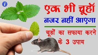 Home Remedies to Get Rid of Rats in Hindi | By Ishan