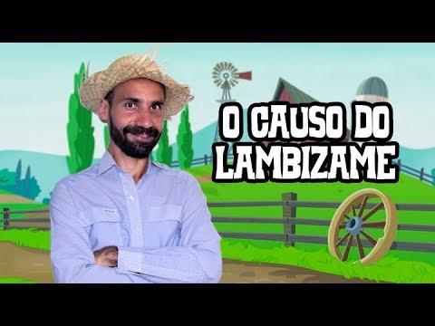 DO BAIXAR CAUSO LAMBIZAME 3