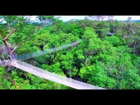 Ceiba Tops Canopy Walkway - Amazon Rainforest, Peru South America from Above: drone phantom 3 jungle