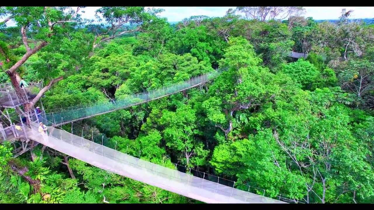 Ceiba Tops Canopy Walkway - Amazon Rainforest Peru South America from Above drone phantom 3 jungle & Ceiba Tops Canopy Walkway - Amazon Rainforest Peru South America ...