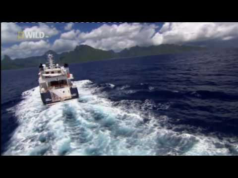 Pacific Ocean Paradise - National Geographic Channel - Mike Cooper - British Voiceover Artist
