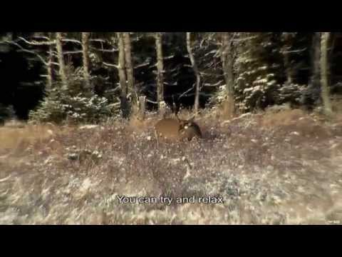 Deer Hunting On Anticosti Island