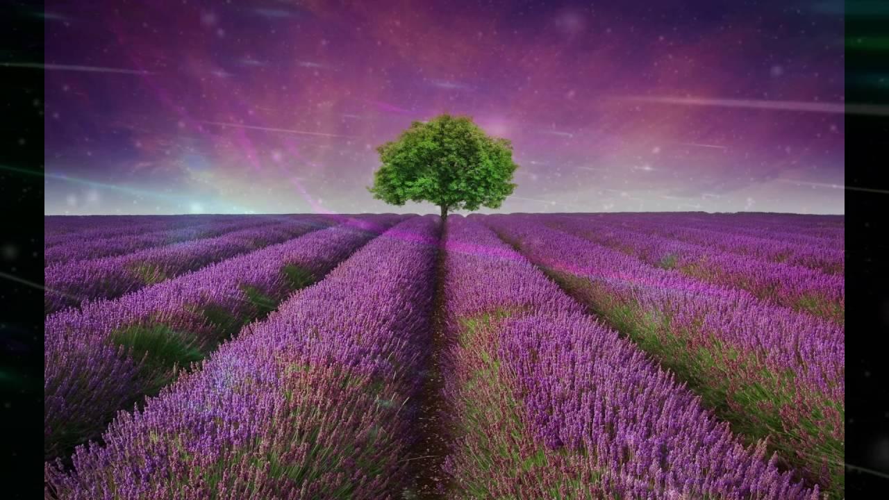 Lenny Kravitz ~ Fields Of Joy ~ Mama Said (HD) - YouTube