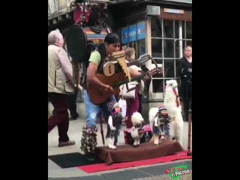 El Gallo Por La Mañana - El Hombre Orquesta