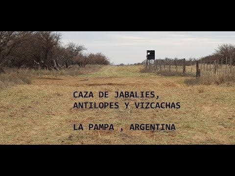 Caceria De Jabali Antilopes Y Vizcachas La Pampa Argentina