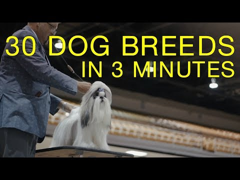 30 Dog Breeds in 3 Minutes (Tampa Bay Dog Show)