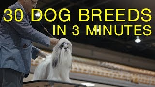 http://www.petgreatness.com 30 dog breeds in under 3 minutes! This ...
