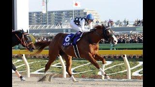 【第36回フェブラリーステークス(GⅠ)】パドック全頭入場 勝ち馬:インティ