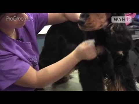 Grooming Guide - Cocker Spaniel - Handstrip/Show/Competition Trim - Pro Groomer