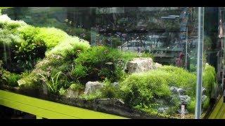 Pacific Aquarium - New York City [Local Fish Store Travel ep. 5]