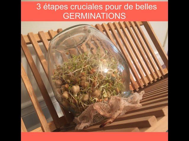 Mes 3 étapes cruciales pour de belles germinations!