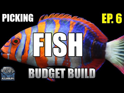 Selecting SALTWATER FISH For Beginners In A New Budget Build Aquarium