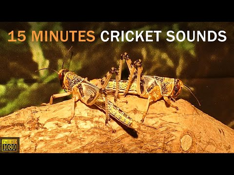 Nature Therapy: Relaxing video with Natural Sounds. Video focus on grasshopper and crickets sounds.