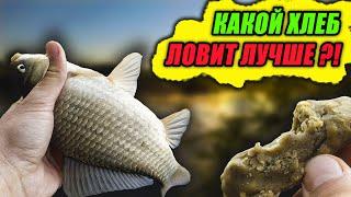 Рыбалка на ХЛЕБ Какой ХЛЕБ ловит ЛУЧШЕ БЕЛЫЙ или ЧЕРНЫЙ Эксперимент с насадками День 2