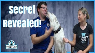 Dog tricks with sara carson and hero from america's got talent!
