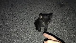 野良の黒猫の赤ちゃんとっても人懐っこくて癒された~(о´∀`о)