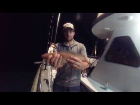 Offshore Wreck Fishing