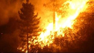 Un incendie dans le maquis blesse 5 pompiers en Corse