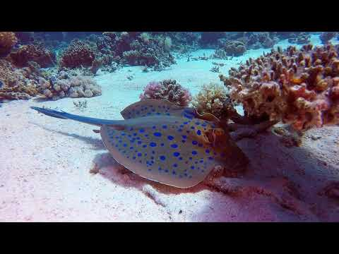 Red Sea Scuba Diving at Hurghada with Aquanaut Diving Club  Turtle Bay