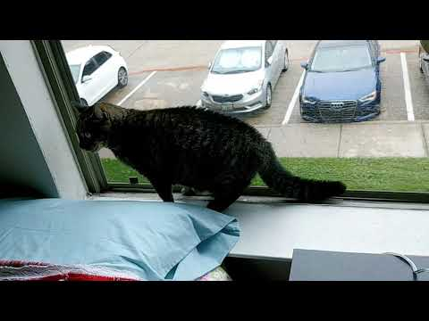 My cat sees another cat outside and screams like a baby