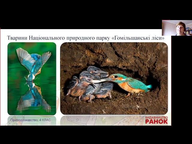 4 клас. Природознавство. Подорож заповідниками України
