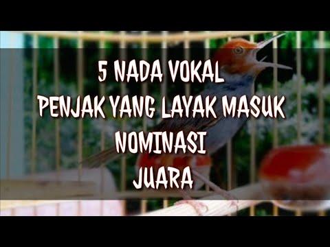 Free Download 5 Nada Vokal Prenjak Kepala Merah Yang Masuk Nominasi Juara Mp3 dan Mp4